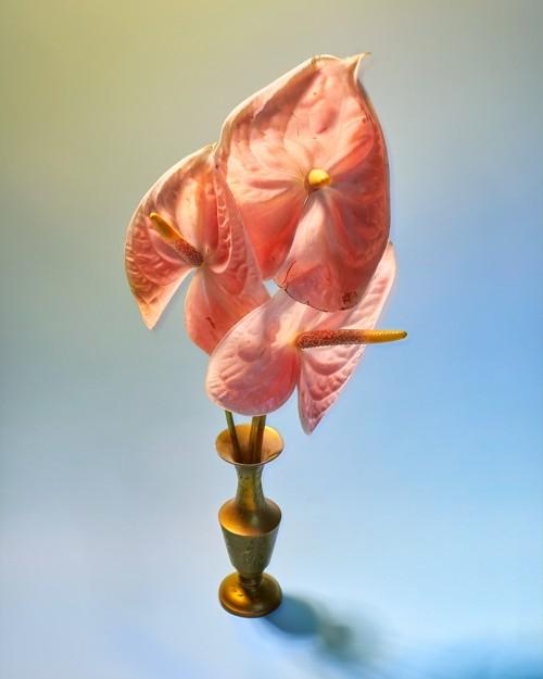 Le Fleur Du Mal cover photo